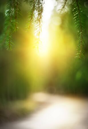 Abstract blurred nature background with bright sunlight photo