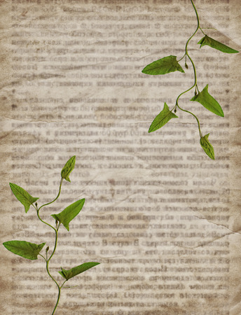 newspaper texture: Old vintage newspaper texture with green dry plant