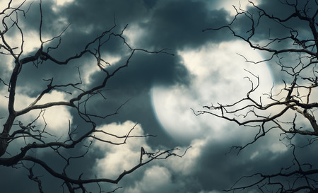 spooky: Halloween background with dark forest, sky and moon