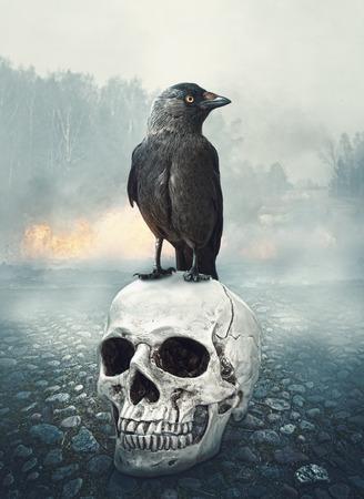 black raven: Black raven on the skull. Halloween mystical scene
