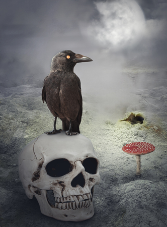 Halloween mystical spooky background with crow on the skull Stock Photo