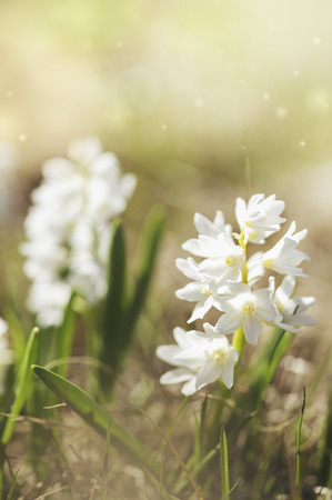 Fresh beautiful white flower with sunlight. Spring and summer background Zdjęcie Seryjne - 121618235
