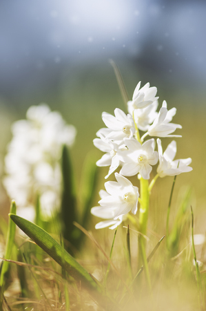 Fresh beautiful white flower with sunlight. Spring and summer background