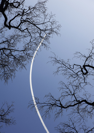 The trail of flying airplane in clear blue sky and black tree branches Zdjęcie Seryjne - 121618262