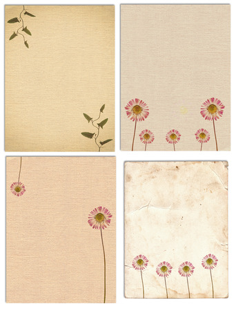 Set of various Old vintage paper texture with dry plants and flower isolated on the white 版權商用圖片