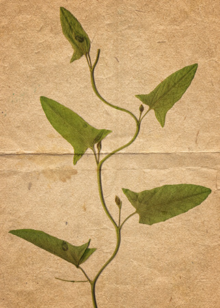 Vintage background with dry plant on old paper texture Zdjęcie Seryjne - 122762597