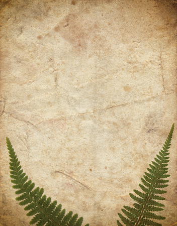 Vintage background with dry plant fern on old paper texture Zdjęcie Seryjne - 122762593