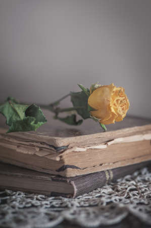 Vintage Still life with dry yellow rose on the retro lace fabric and old book