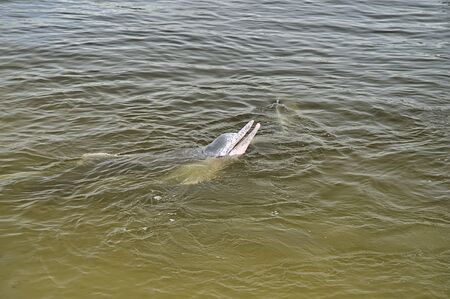 Wild dolphins in Tin Can Bay which can be fed by people