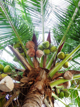 waft: Coconuts and blue sky