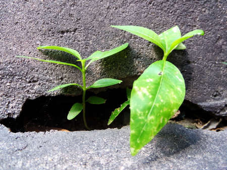 hold ups: Survival plant