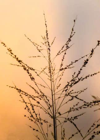 temperament: top grass in the sky