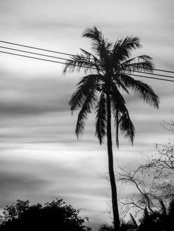 electric line: sunsets and black and white and electric line