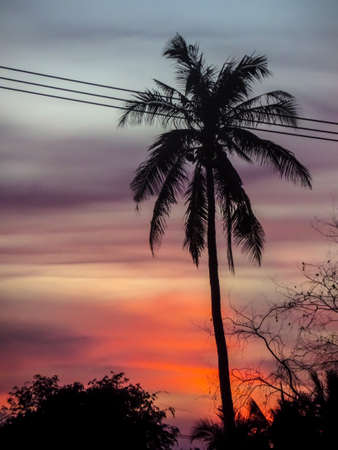 electric line: sunsets and coconut and electric line Stock Photo
