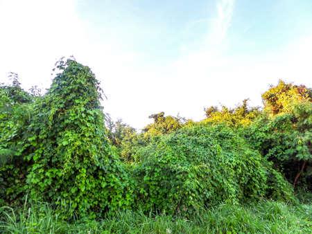 abandon: Abandon land near landfill in local