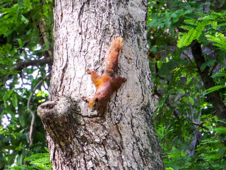 munching: squirrel find the way to food of fruits basket Stock Photo