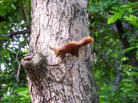 log basket: squirrel find the way to food of fruits basket Stock Photo