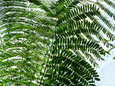 underbrush: Green leaves moving by wind in the sky on the morning