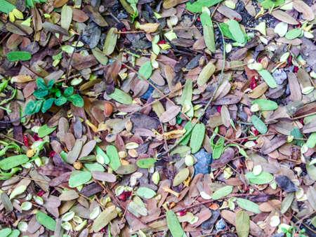 underbrush: green leaves on floor in the garden