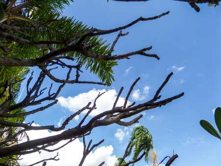 garden city: �rbol seco en el cielo sobre la ciudad de jardiner�a local