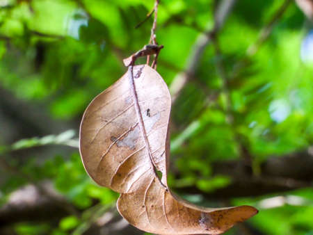 underbrush: dry leaf hang on by web in garden
