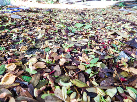 underbrush: Dry leaves fall by rain and wind in rainny season
