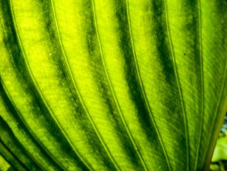 underbrush: Under green leaf in the garden