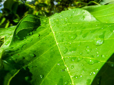 underbrush: In rainny season has rain drop many times in local park