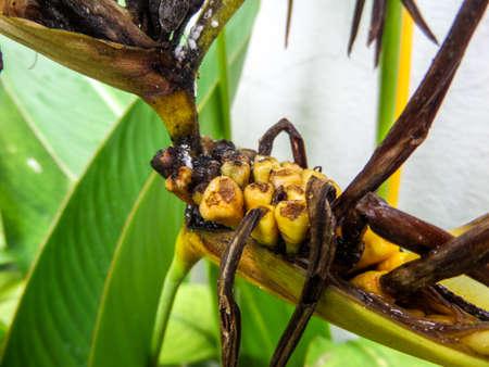 bird of paradise: Dry bird paradise flower