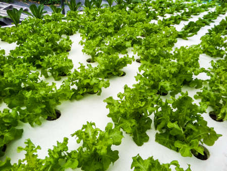 Hydroponics is a subset of hydroculture and is a method of growing plants using mineral nutrient solutions, in water, without soil