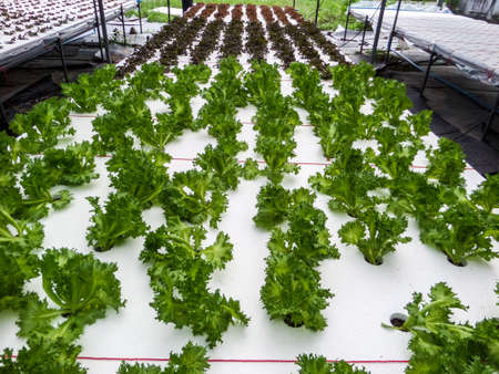 subset: Hydroponics is a subset of hydroculture and is a method of growing plants using mineral nutrient solutions, in water, without soil