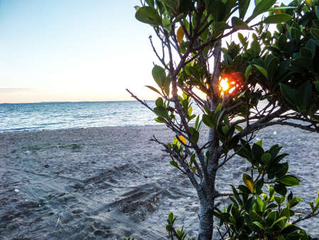 light complexion: Sunset and plant moving by wind at beach