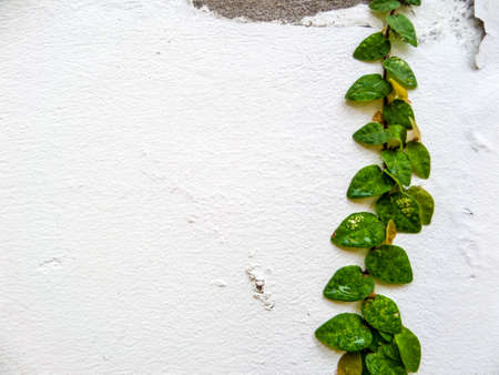 common room: Green leaf border, Isolate of plant on the wall in garden