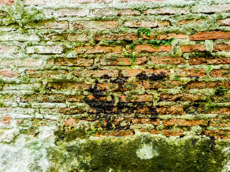 moss: ancient wall has ditry and old and moss on surface