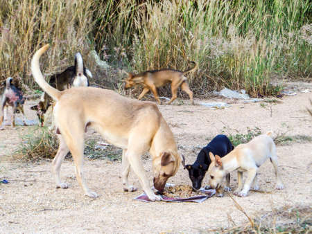 pellet: A group of stray dog eat junk food or food pellet from kindness people.