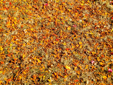 high temperature: Dry orange and red leaves has fall on floor cause high temperature in summer Stock Photo
