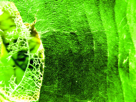 crystallize: small crystallize detail of leaf and area of worm eat background Stock Photo