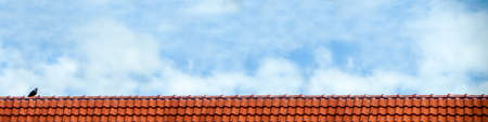 temperament: pigeon stand on roof and blue sky white cloud panorama view Stock Photo