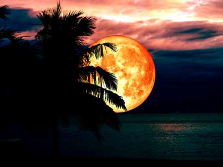 full blood moon dark sky and silhouette coconut tree on beach Stock Photo
