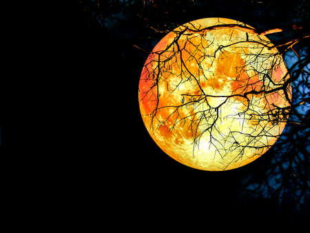temperament: super blood moon silhouette dry tree on night sky Stock Photo