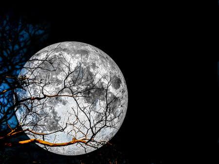 super moon silhouette dry tree on night sky