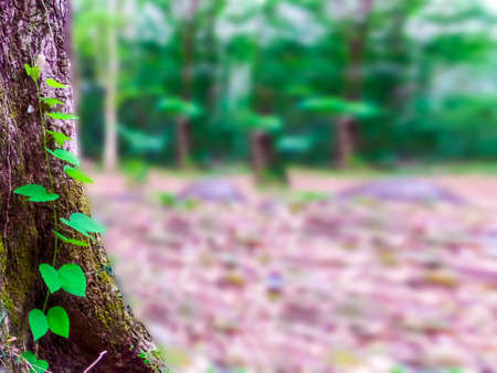 temperament: green plant growning on ancient tree and blur background Stock Photo