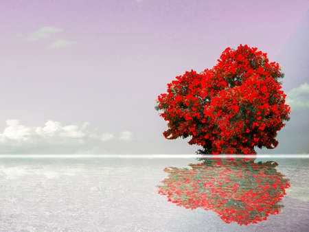 red color flower reflection sky cloud and water surface of lake
