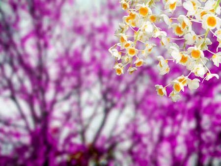 temperament: orchid corner and blur forest background Stock Photo