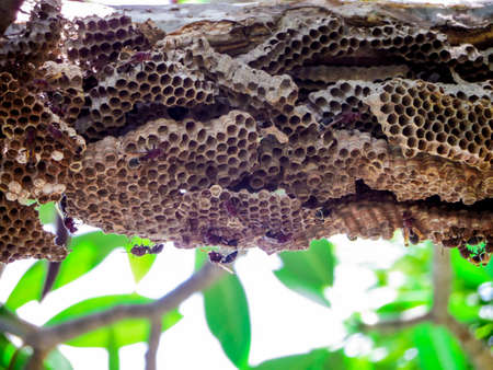 apocrita: A wasp is any insect of the order Hymenoptera and suborder Apocrita that is neither a bee nor, Some solitary wasps nest in small groups alongside others of their species