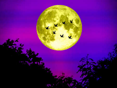 birds fly away home and super moon in light night
