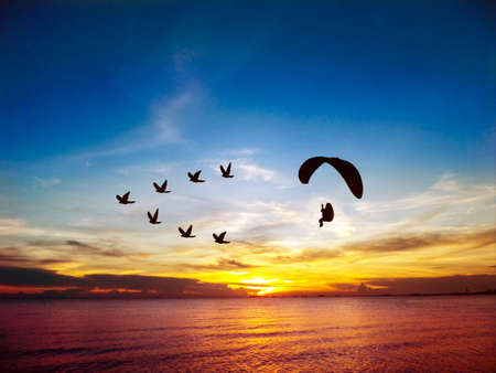 silhouette flying birds and paramotor over sea and sunset sky