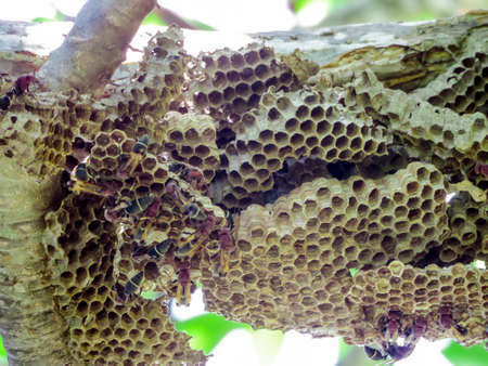 A wasp is any insect of the order Hymenoptera and suborder Apocrita that is neither a bee nor, Some solitary wasps nest in small groups alongside others of their species