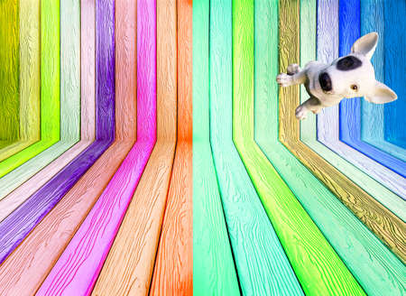 black eye dog sit on right colorful wood texture background Stock Photo