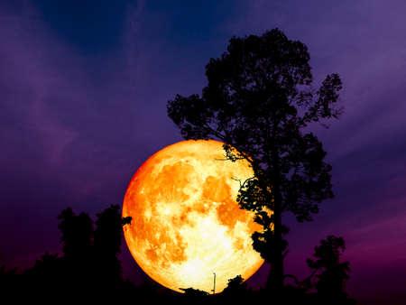 Super Blue Blood Moon retour arbre silhouette moyenne dans le parc Banque d'images - 94462962